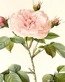 Concerti al Cenacolo – L'Homme Armé/Ther is no rose…